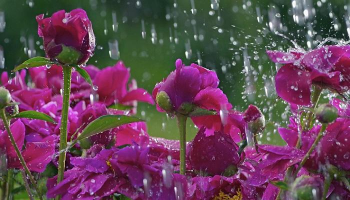 água-flores